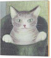 Cat In A Bucket Wood Print