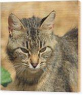 Cat In A Yard Wood Print