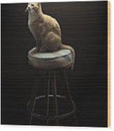 Cat In Repose Wood Print