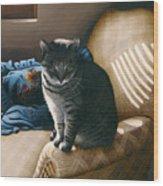Cat In Shadows Wood Print by Carol Wilson