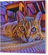 Cat Laying On Braided Rug Wood Print