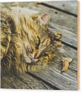 Cat Lie Wood Floor Wood Print