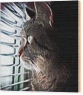 Cat Looking Out Window Wood Print