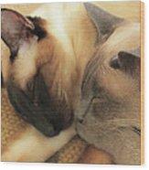 Cat Nap With Toby And Sadi Wood Print