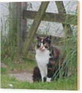 Farm Cat On Duty Wood Print