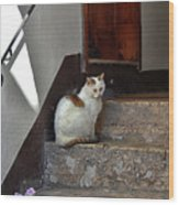Cat On Steps Wood Print