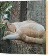 Cat On The Tree Wood Print