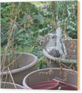 Cat Playing In Flowerpot Wood Print