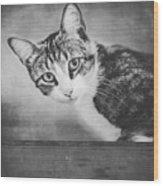 Cat Portrait 4 Wood Print