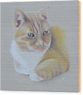 cat portrait - Astra Wood Print