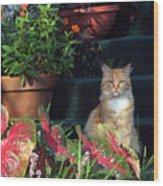 Cat Postcard Wood Print
