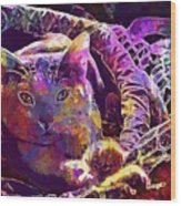 Cat Purr Kitten Pet Fur Feline  Wood Print