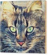 Cat Simba Wood Print