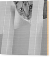 Cat Spy Black And White Wood Print