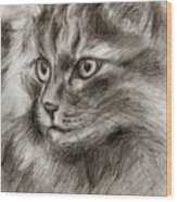 Cat Study Drawing No Two Wood Print
