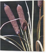 Cat Tails Wood Print