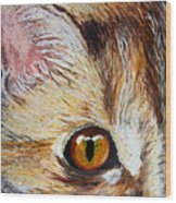 Cat Visions Wood Print by Lorraine Foster