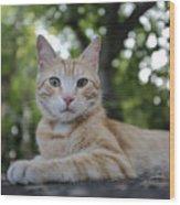 Cat Volterra Italy Wood Print
