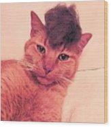 Cat Wearing A Wig Wood Print