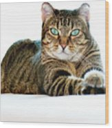 Cat With Bright Eyes Wood Print