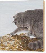 Cat With Coins Wood Print