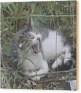 Cat Yawning In The Garden Wood Print