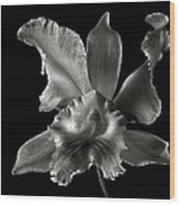 Catalea Orchid In Black And White Wood Print