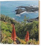 Catalina Island Coastline Wood Print