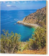 Catalina Island Lover's Cove Picture Wood Print