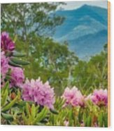 Catawba Rhododendron At The Craggy Wood Print