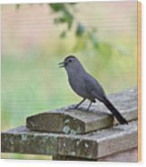 Catbird Calling Wood Print