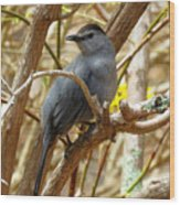 Catbird In Spring Wood Print