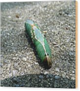 Caterpillar 3 Wood Print