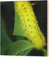 Caterpillar Wood Print