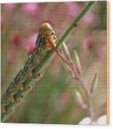 Caterpillar Munching Wood Print