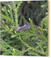 Caterpillar On Branch Wood Print