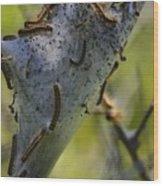 Caterpilliars Wood Print