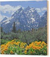 Dm9328-cathedral Group Tetons  Wood Print