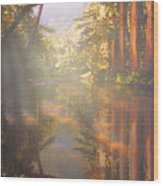 Cathedral Redwoods Wood Print
