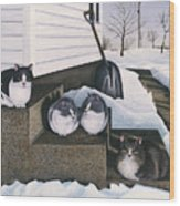 Cats - Jake's Mousers Wood Print