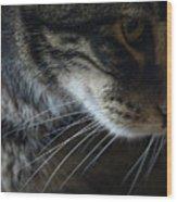 Cats Eye Wood Print