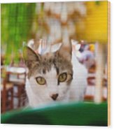 Cat's Eye On Me Wood Print