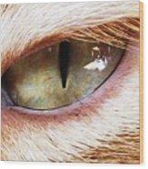 'cats Eye' Wood Print