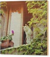 Cats Eye View Wood Print