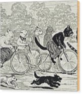 Cats In A Bicycle Race, Hyde Park, 1896 Wood Print