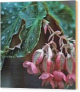 Cat's Paw Begonia Wood Print