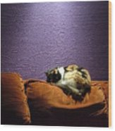 Cats Sleep In Odd Places Wood Print