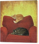 Cats Sleeping On Sofa Wood Print