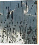 Cattail Sky Wood Print