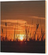 Cattails And Twilight Wood Print